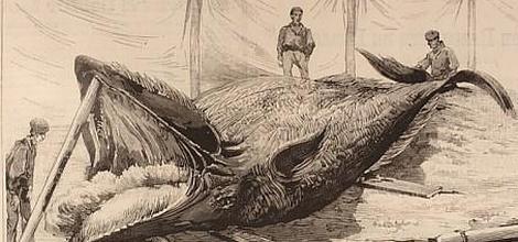 pesca-ballena